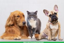 What Is Not Covered By Pet Insurance?